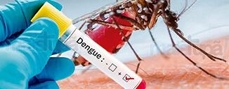 331 municípios do Paraná estão com infestação predial da dengue